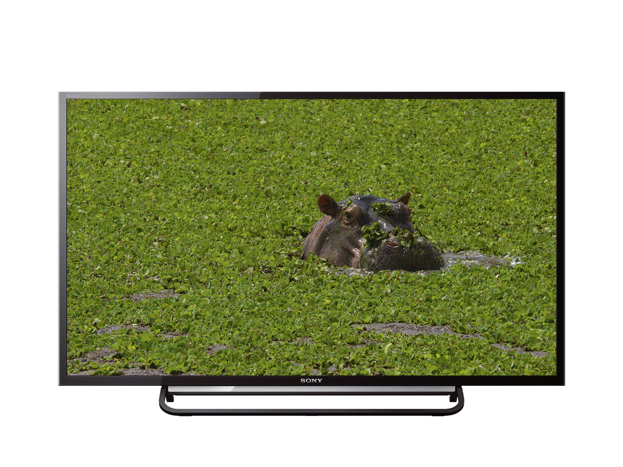 kdl-40r480b-hippo-low-res-1