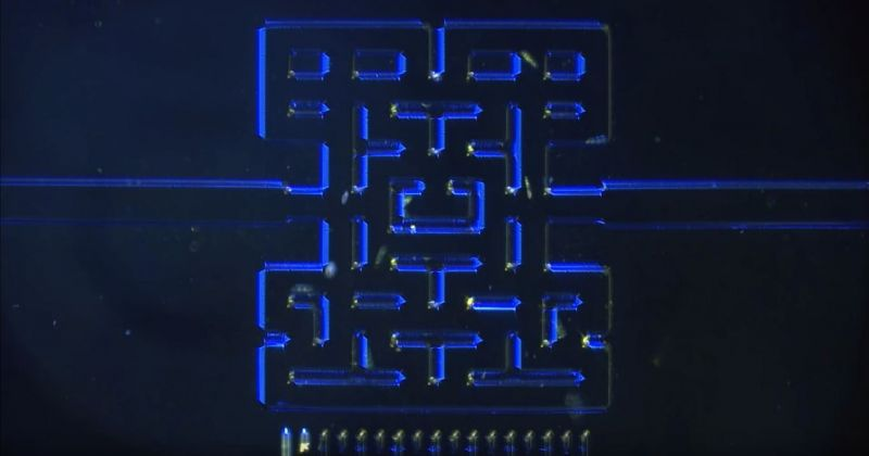 Pac-Man microscópico