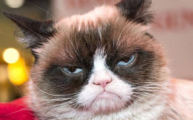 gato ransomware