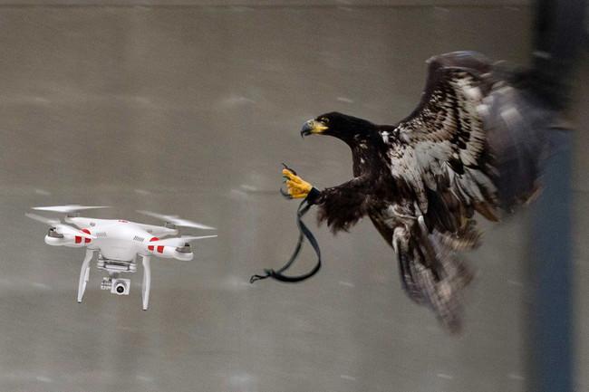 águias drones